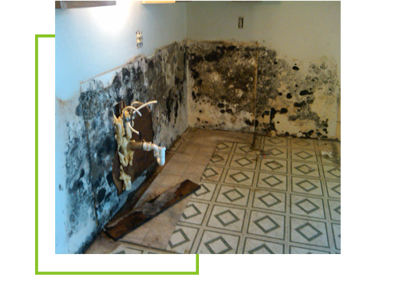 Mold and Mildew treatment